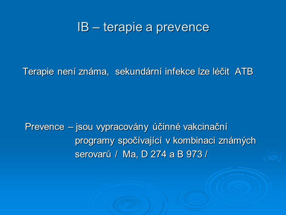 IB – terapie a prevence Terapie není známa, sekundární infekce lze léčit ATB. Prevence – jsou vypracovány účinné vakcinační.