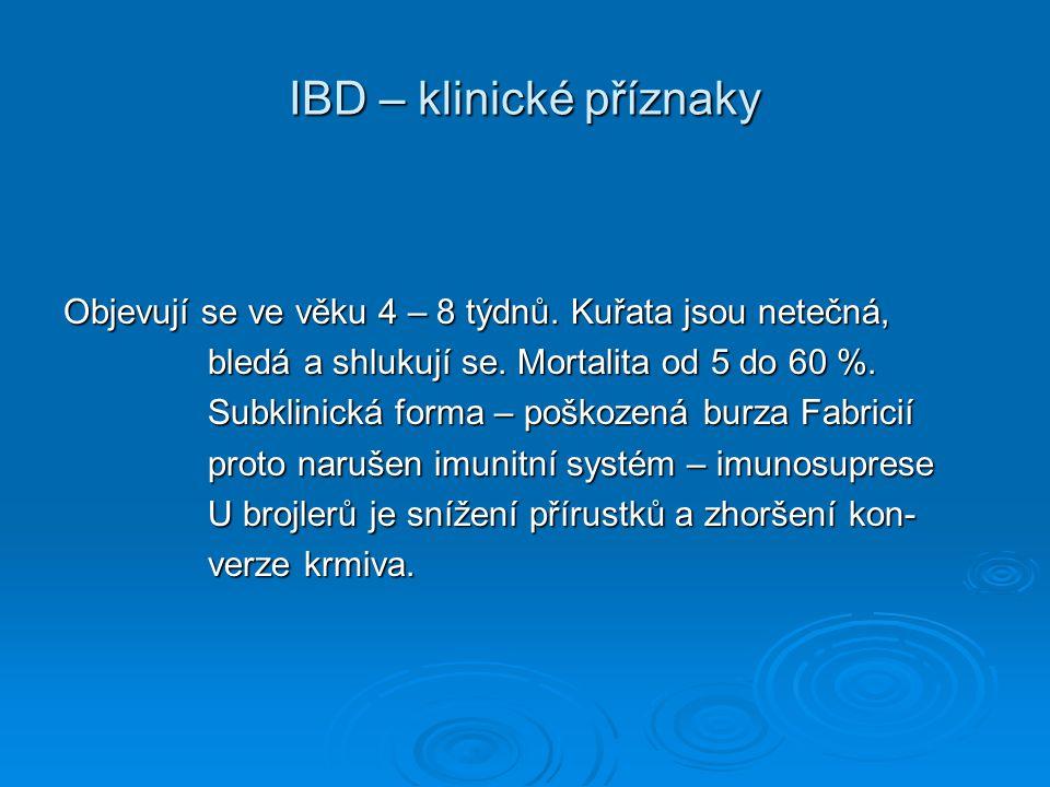 IBD – klinické příznaky