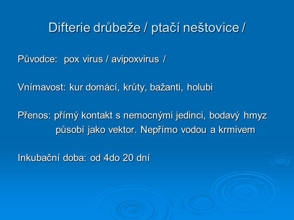 Difterie drůbeže / ptačí neštovice /