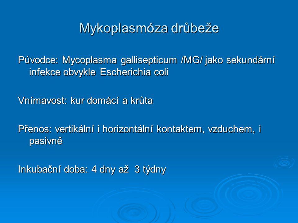 Mykoplasmóza drůbeže Púvodce: Mycoplasma gallisepticum /MG/ jako sekundární infekce obvykle Escherichia coli.