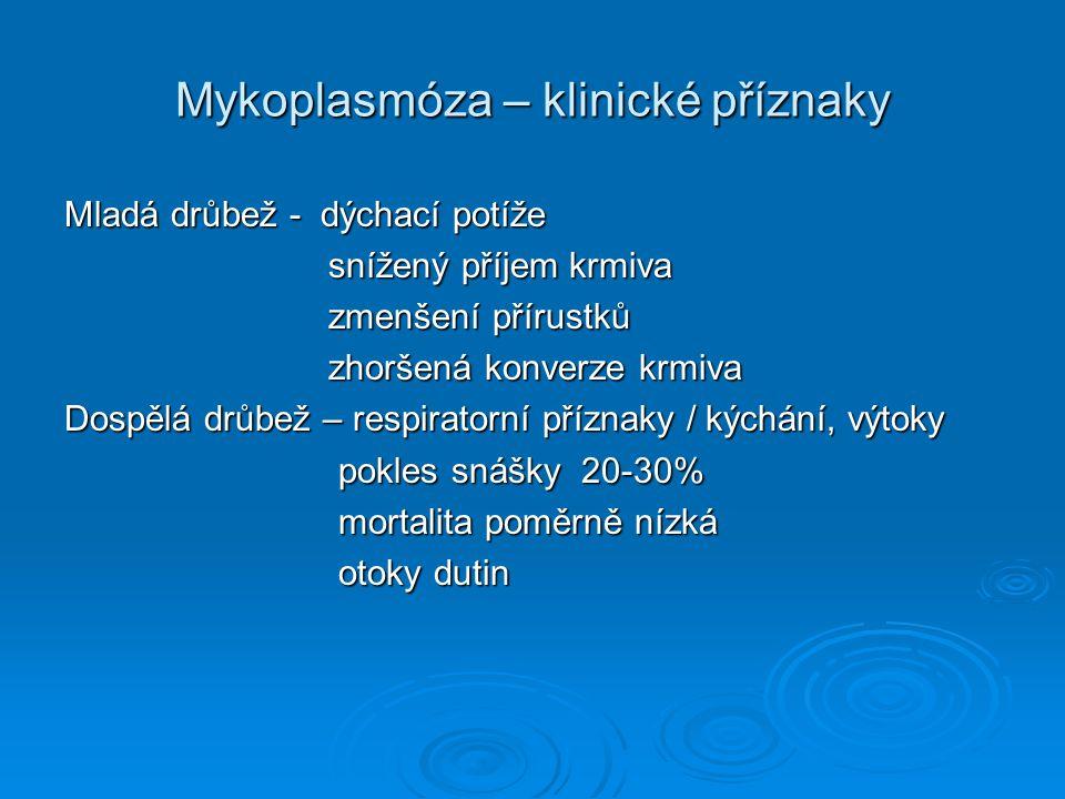 Mykoplasmóza – klinické příznaky