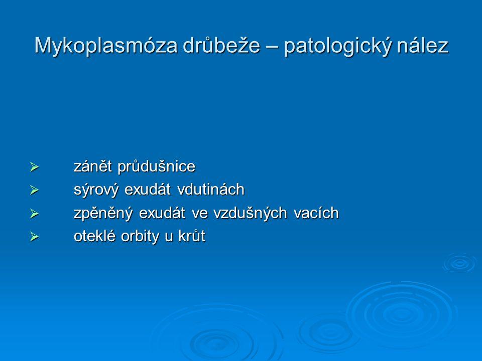 Mykoplasmóza drůbeže – patologický nález