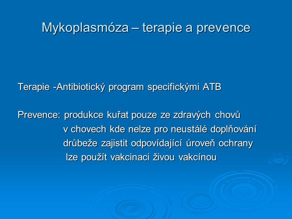 Mykoplasmóza – terapie a prevence