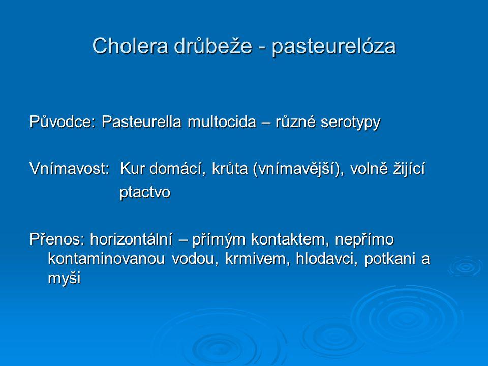 Cholera drůbeže - pasteurelóza