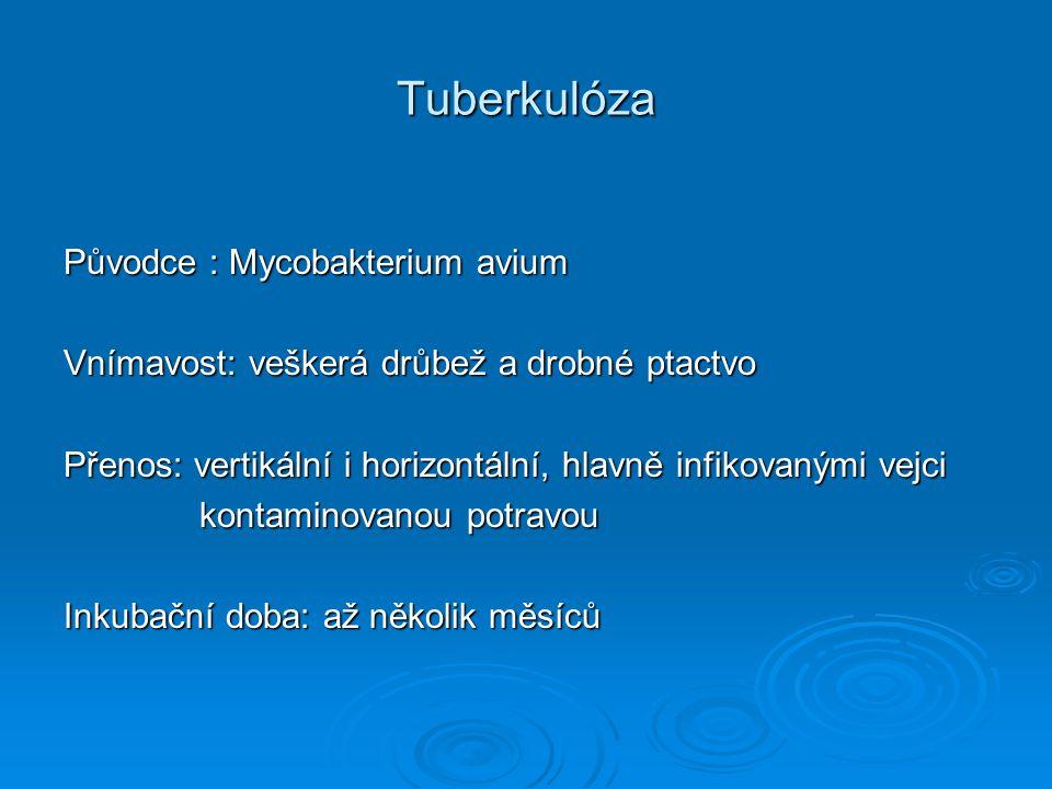 Tuberkulóza Původce : Mycobakterium avium