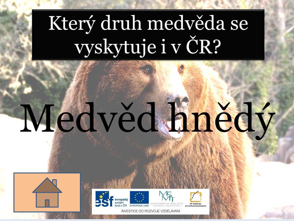 Který druh medvěda se vyskytuje i v ČR