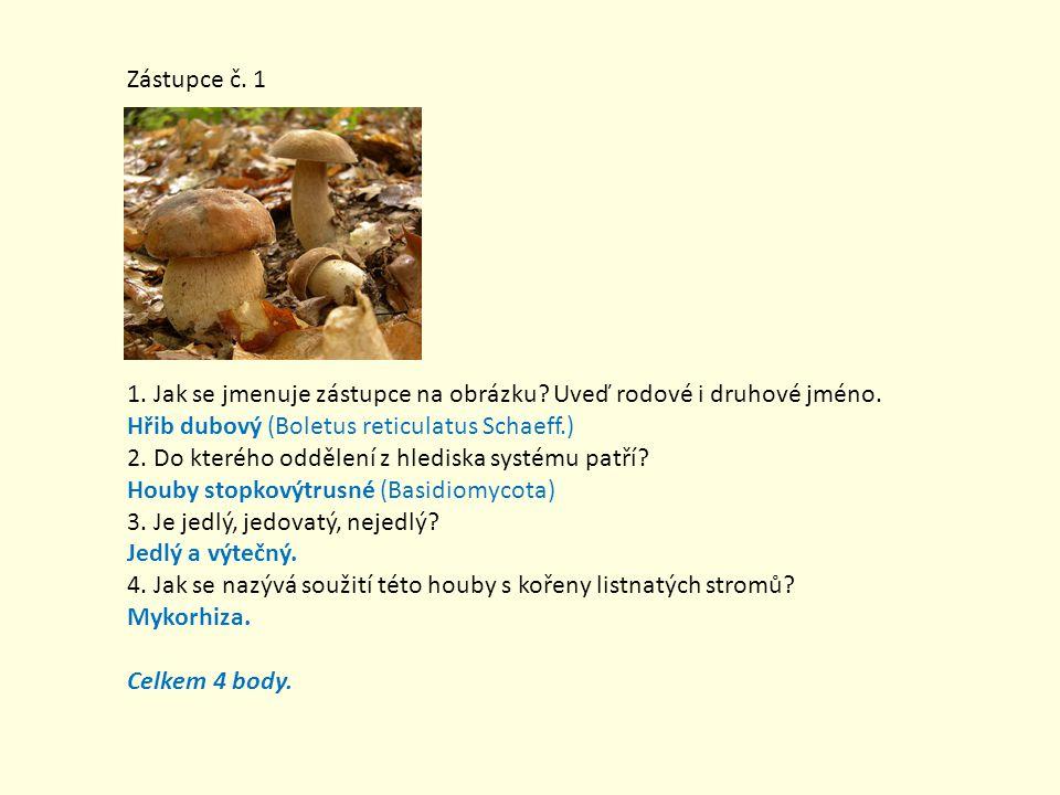 Zástupce č. 1 1. Jak se jmenuje zástupce na obrázku Uveď rodové i druhové jméno. Hřib dubový (Boletus reticulatus Schaeff.)