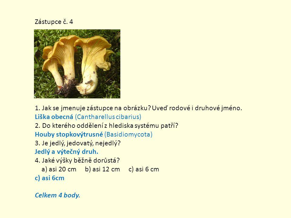 Zástupce č. 4 1. Jak se jmenuje zástupce na obrázku Uveď rodové i druhové jméno. Liška obecná (Cantharellus cibarius)