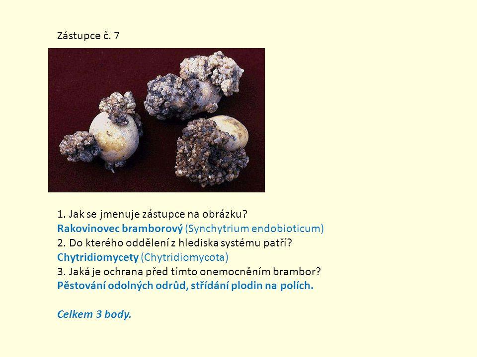 Zástupce č. 7 1. Jak se jmenuje zástupce na obrázku Rakovinovec bramborový (Synchytrium endobioticum)