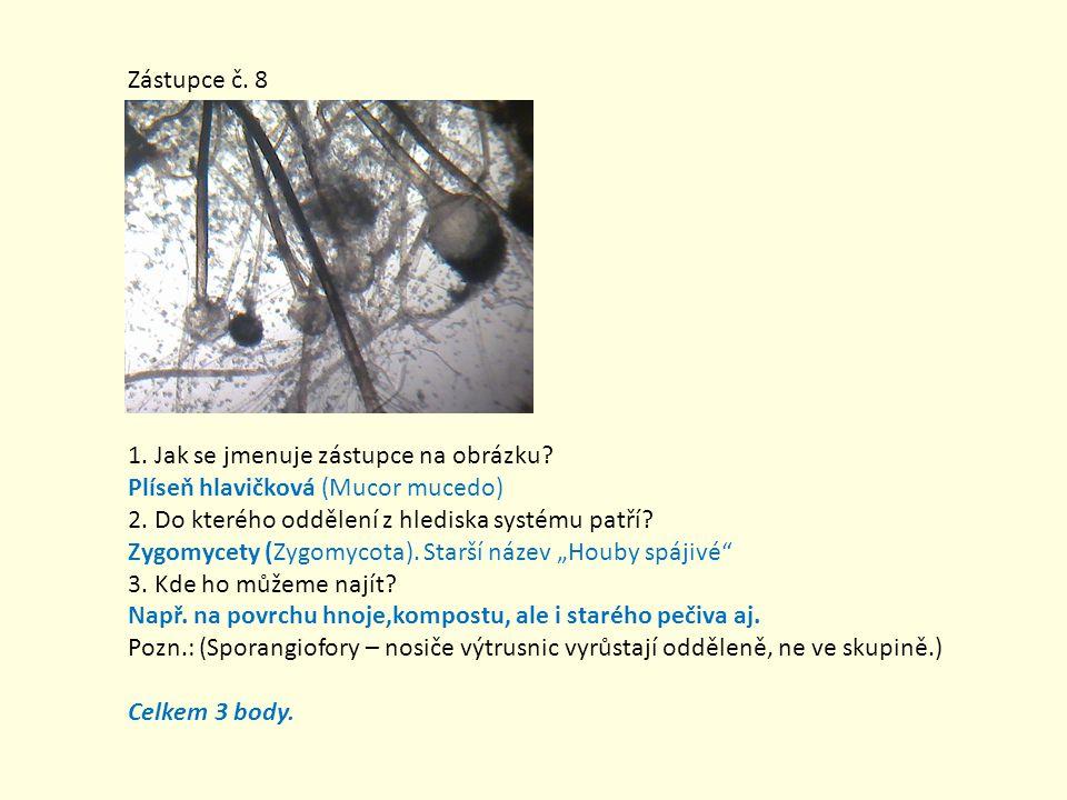 Zástupce č. 8 1. Jak se jmenuje zástupce na obrázku Plíseň hlavičková (Mucor mucedo) 2. Do kterého oddělení z hlediska systému patří