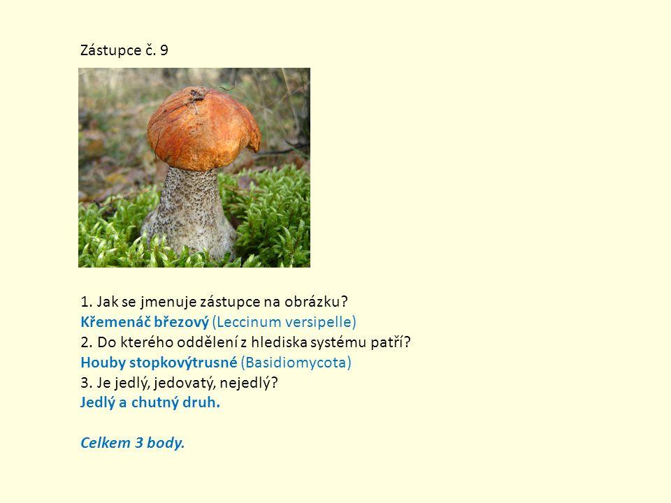 Zástupce č. 9 1. Jak se jmenuje zástupce na obrázku Křemenáč březový (Leccinum versipelle) 2. Do kterého oddělení z hlediska systému patří