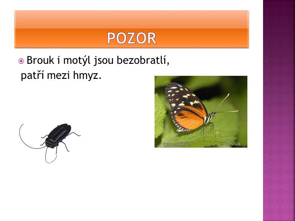POzor Brouk i motýl jsou bezobratlí, patří mezi hmyz.