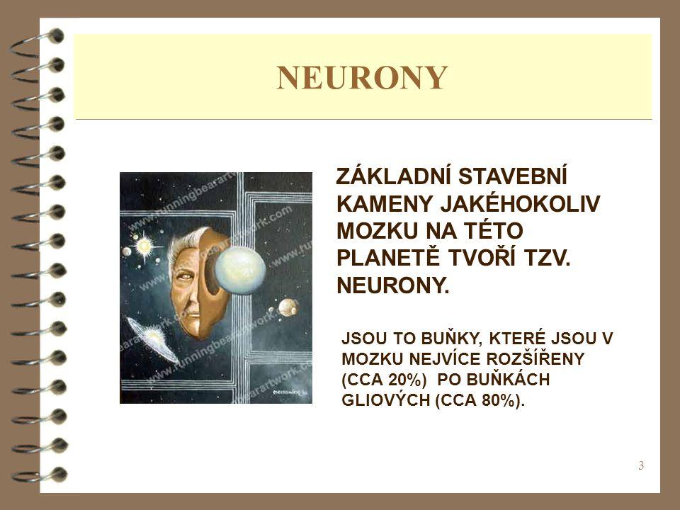 NEURONY ZÁKLADNÍ STAVEBNÍ KAMENY JAKÉHOKOLIV MOZKU NA TÉTO PLANETĚ TVOŘÍ TZV. NEURONY.