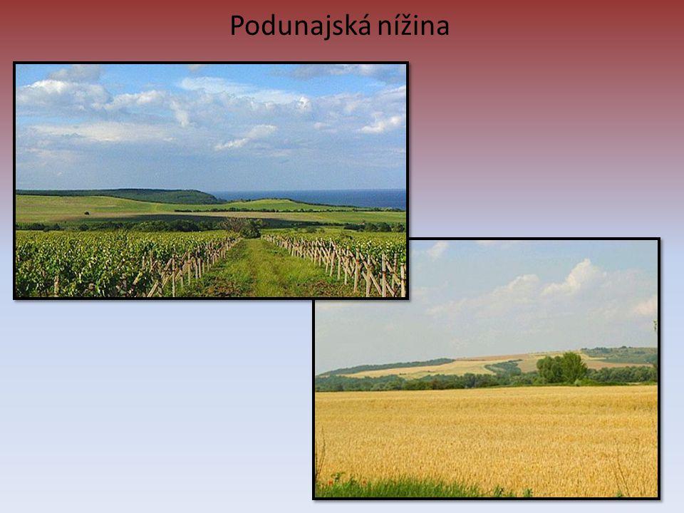 Podunajská nížina