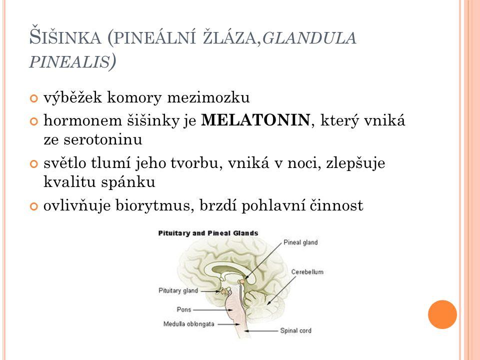 Šišinka (pineální žláza,glandula pinealis)