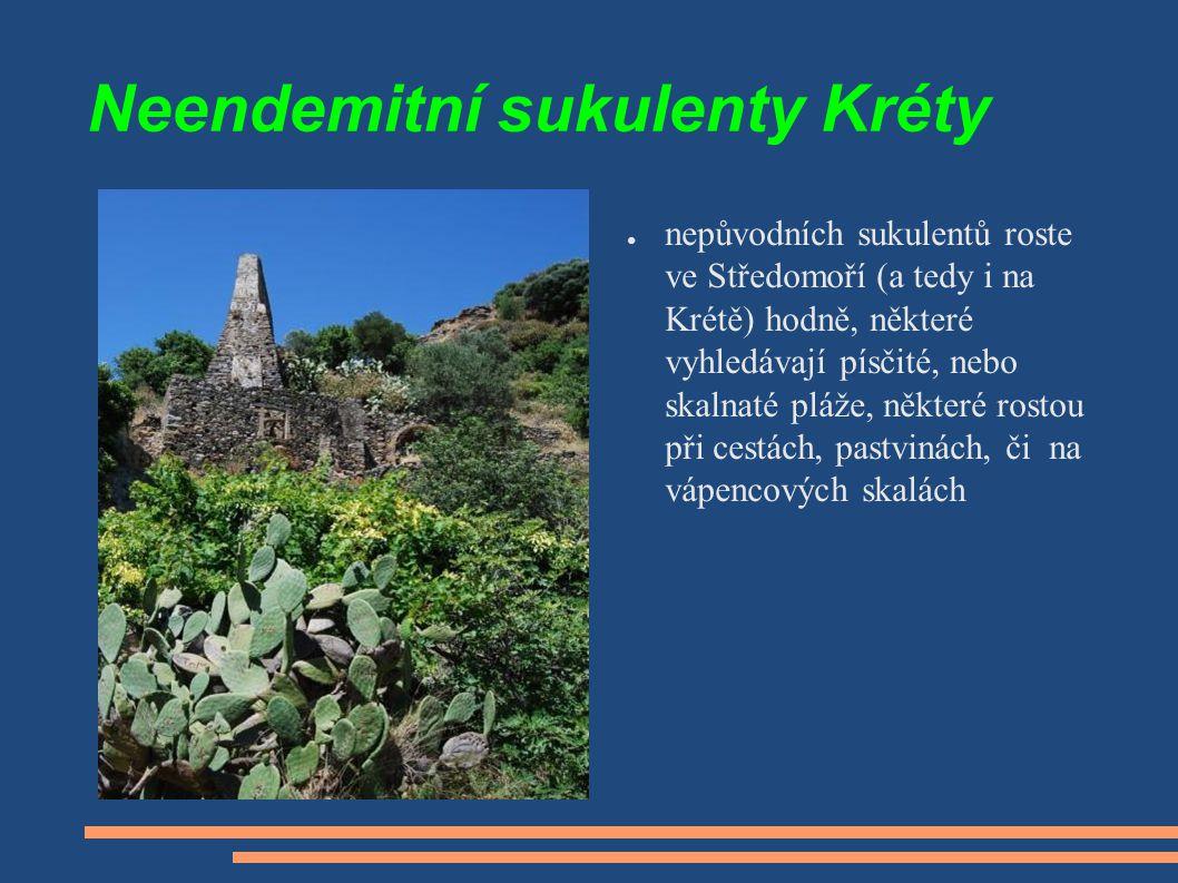 Neendemitní sukulenty Kréty