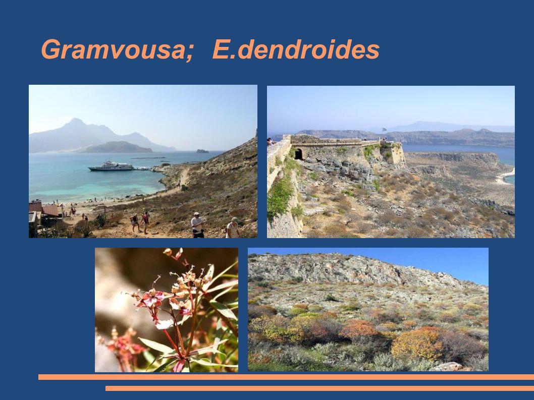 Gramvousa; E.dendroides