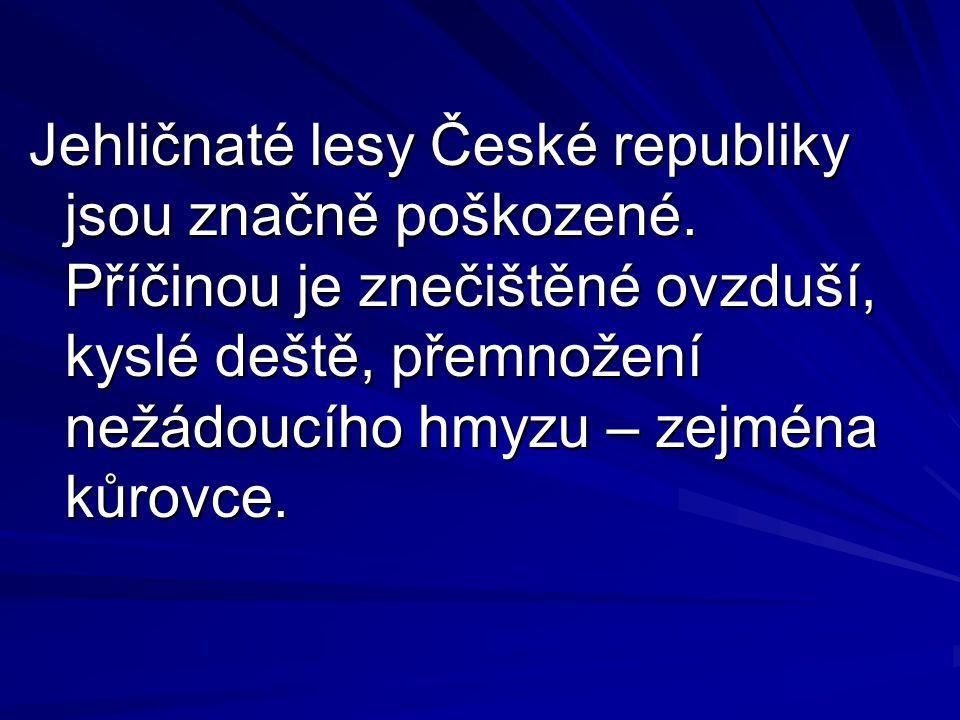 Jehličnaté lesy České republiky jsou značně poškozené