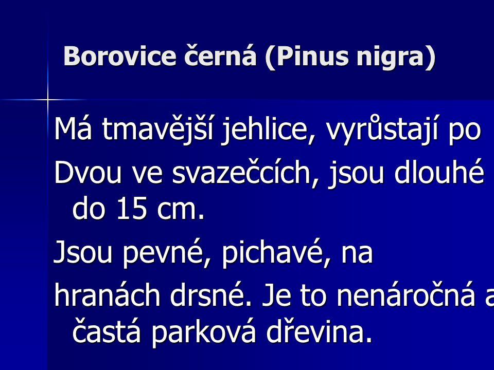 Borovice černá (Pinus nigra)