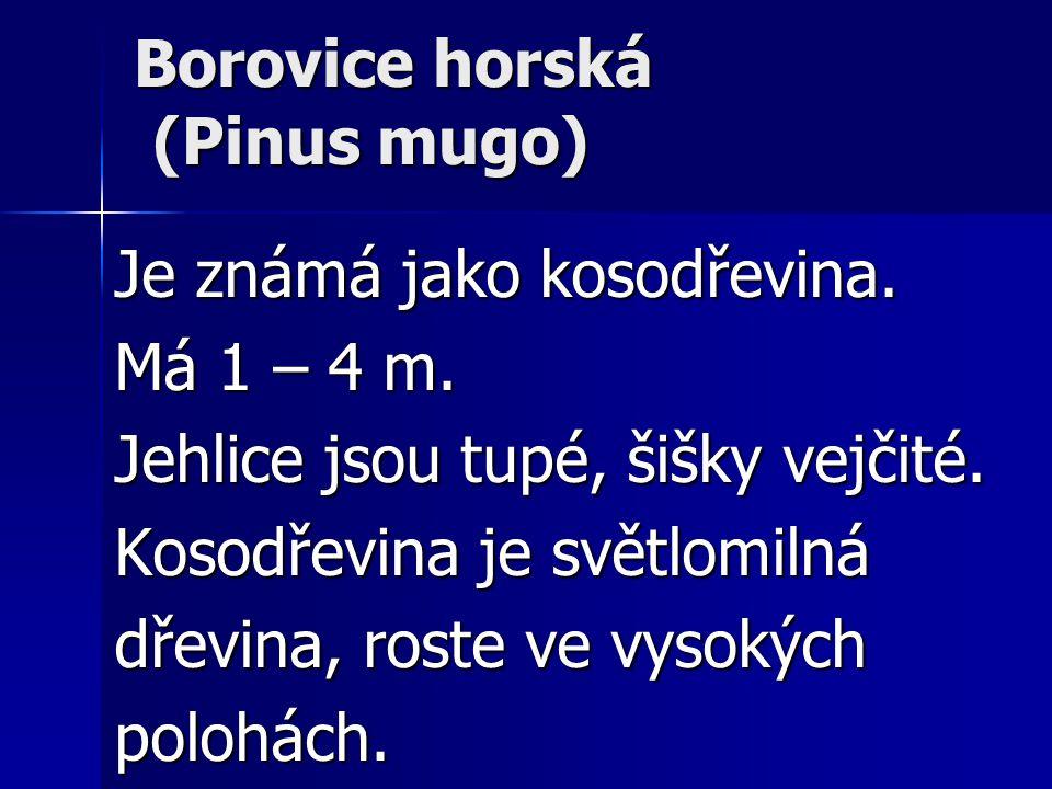 Borovice horská (Pinus mugo)