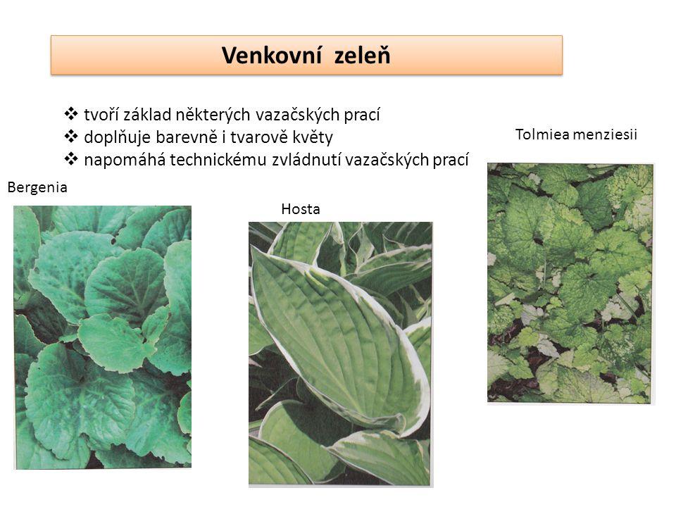 Venkovní zeleň tvoří základ některých vazačských prací