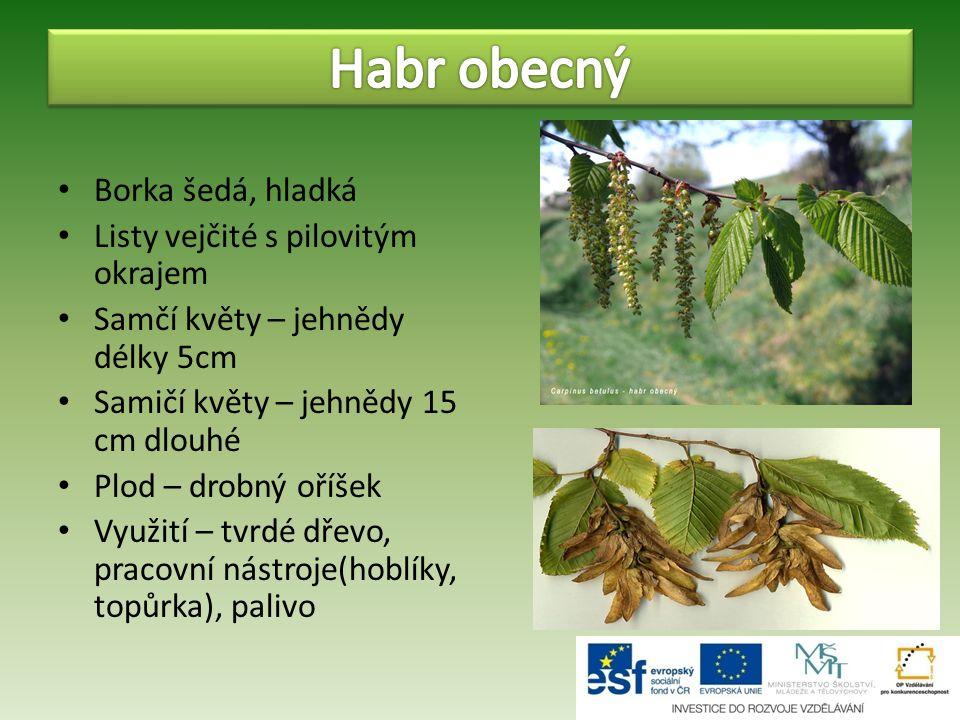 Habr obecný Borka šedá, hladká Listy vejčité s pilovitým okrajem