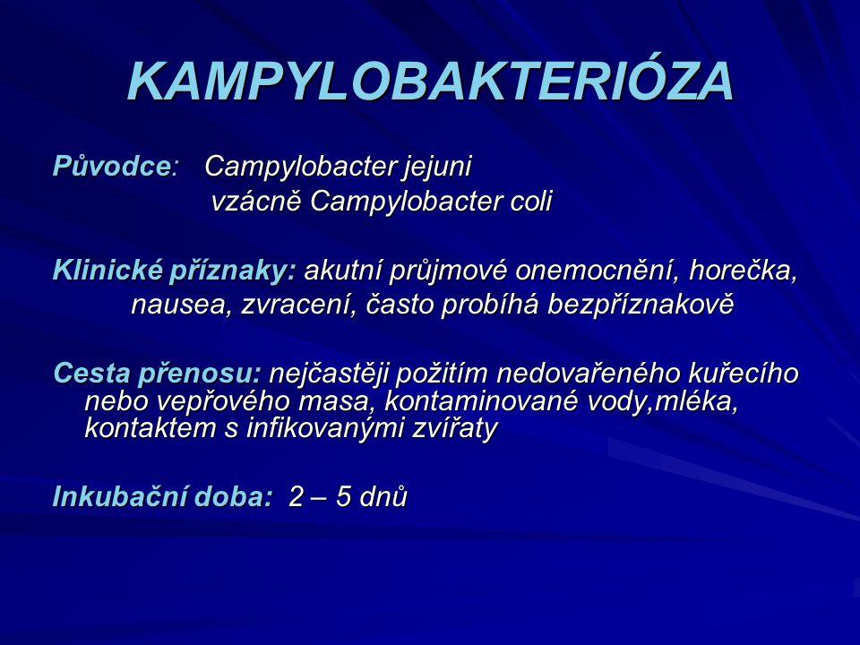 KAMPYLOBAKTERIÓZA Původce: Campylobacter jejuni