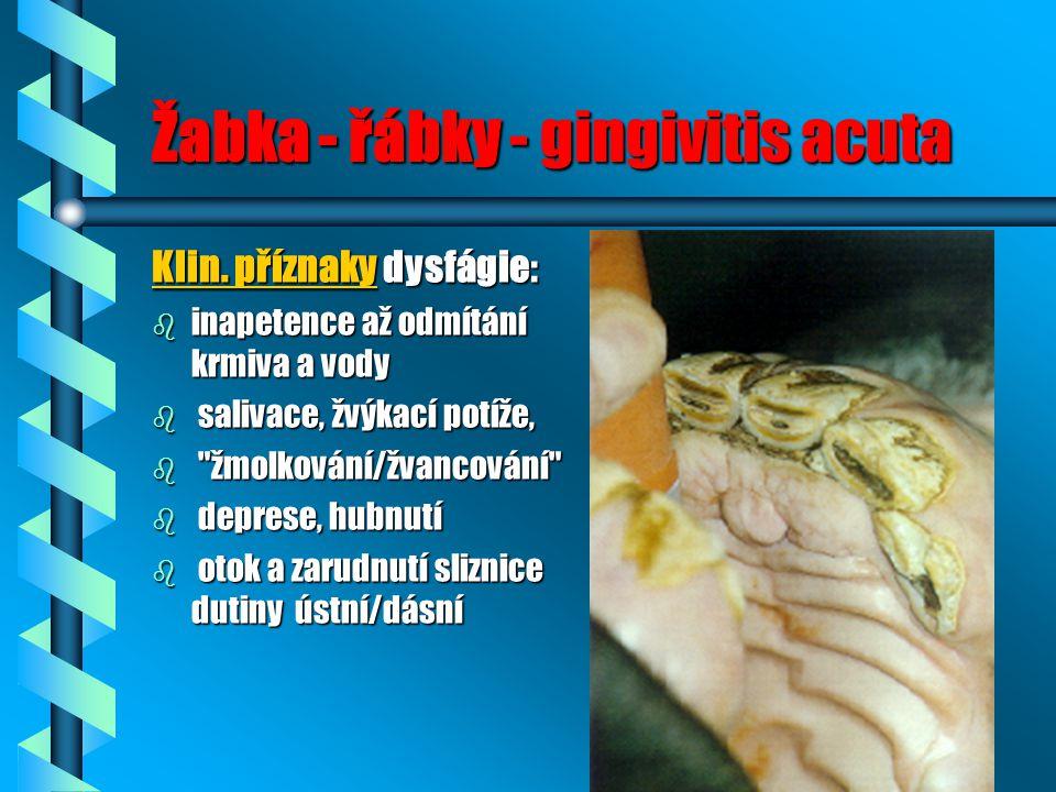 Žabka - řábky - gingivitis acuta