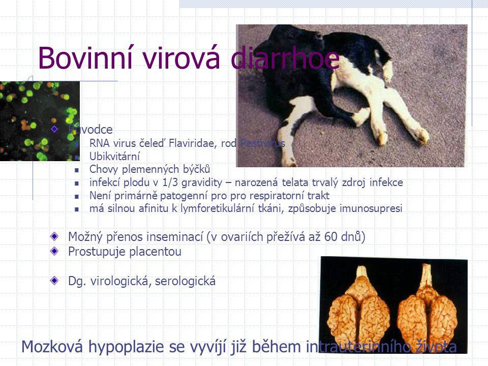 Bovinní virová diarrhoe