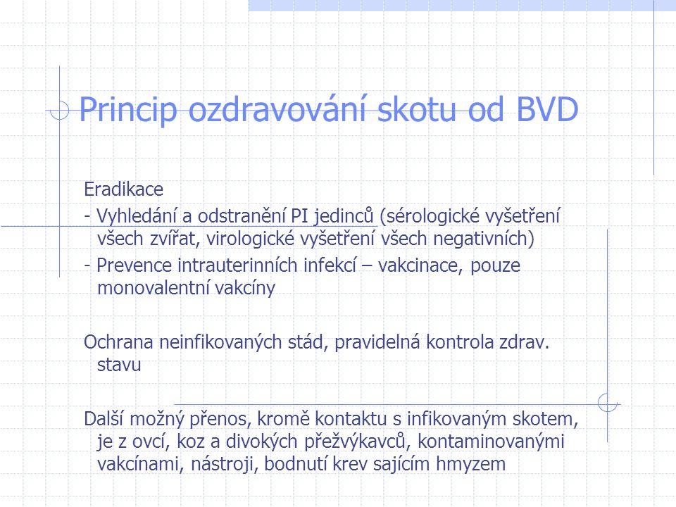 Princip ozdravování skotu od BVD