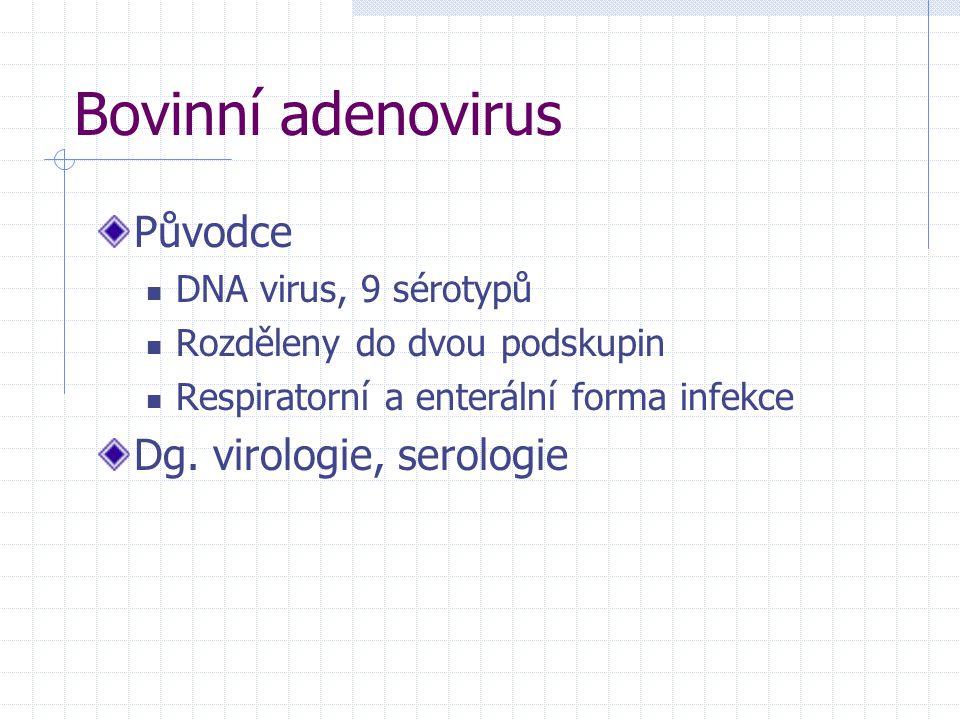 Bovinní adenovirus Původce Dg. virologie, serologie