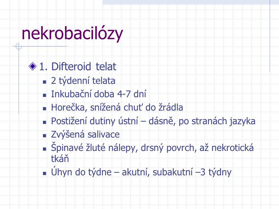nekrobacilózy 1. Difteroid telat 2 týdenní telata