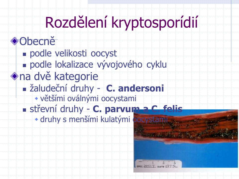 Rozdělení kryptosporídií