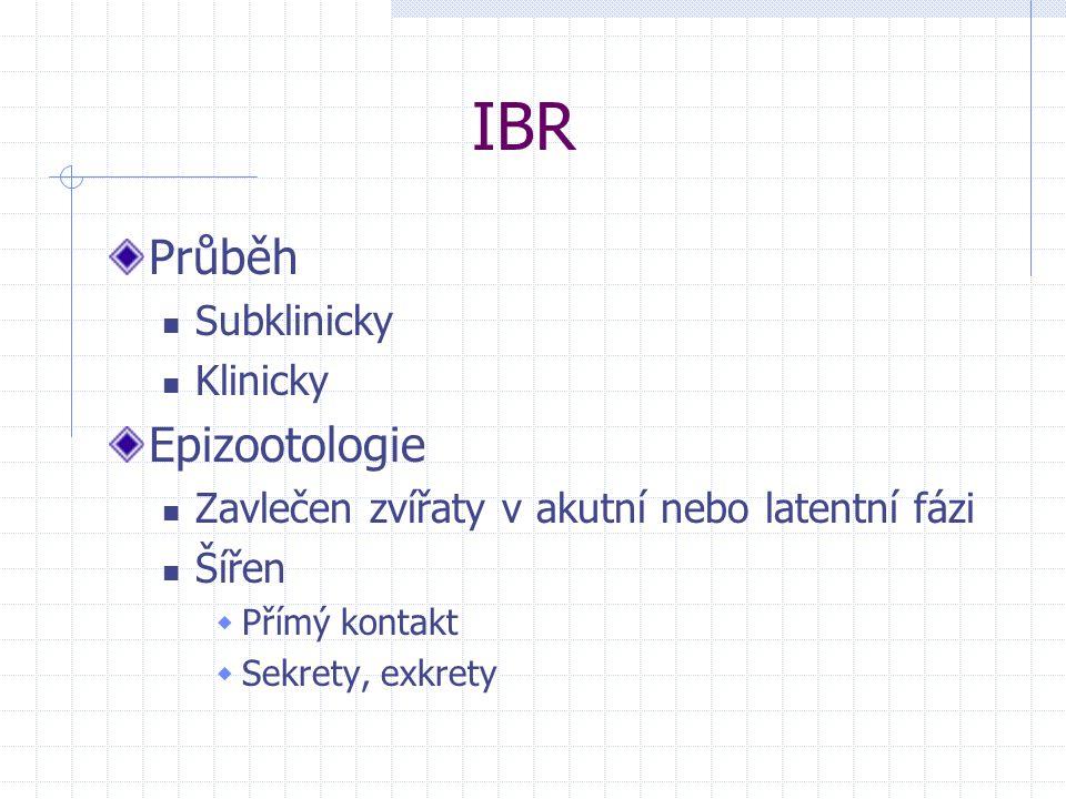 IBR Průběh Epizootologie Subklinicky Klinicky