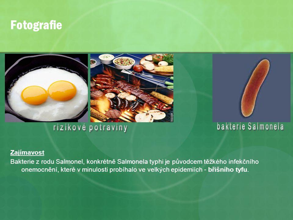 Fotografie bakterie Salmonela rizikové potraviny Zajímavost