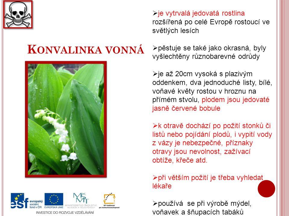 je vytrvalá jedovatá rostlina rozšířená po celé Evropě rostoucí ve světlých lesích