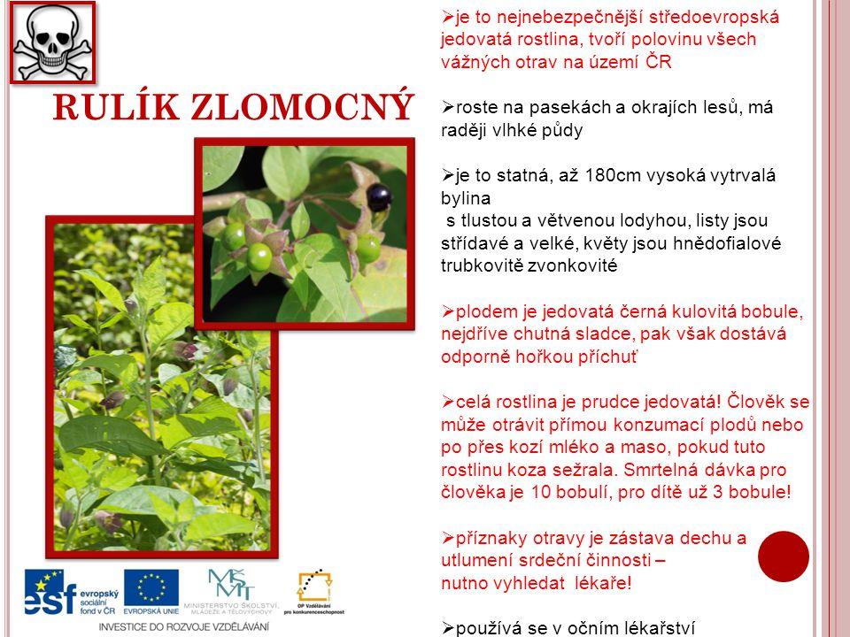 je to nejnebezpečnější středoevropská jedovatá rostlina, tvoří polovinu všech vážných otrav na území ČR