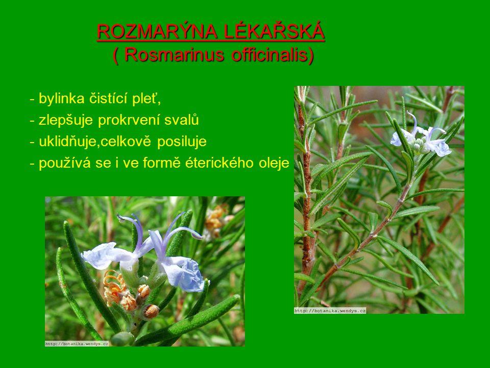 ROZMARÝNA LÉKAŘSKÁ ( Rosmarinus officinalis)