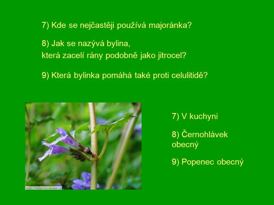 7) Kde se nejčastěji používá majoránka