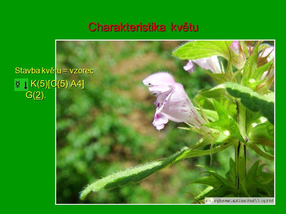 Charakteristika květu