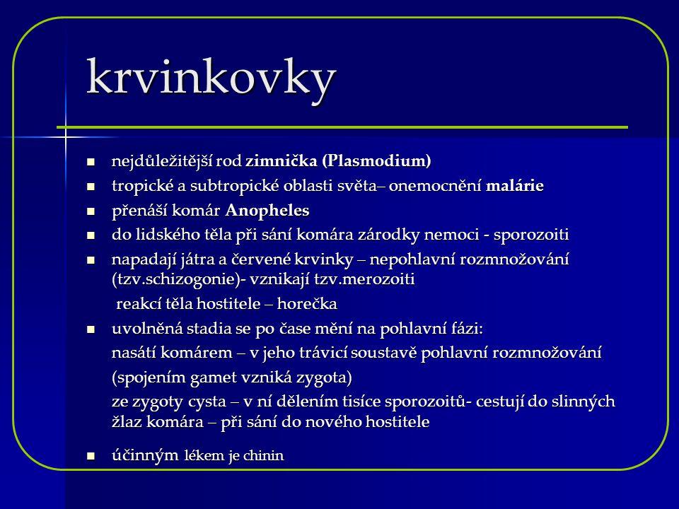 krvinkovky nejdůležitější rod zimnička (Plasmodium)
