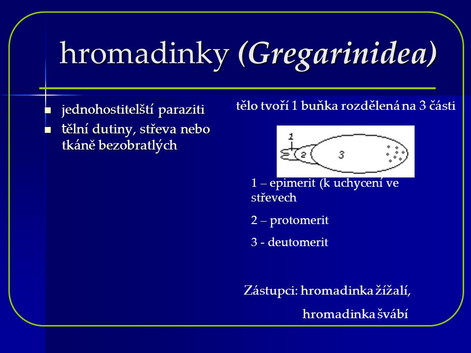 hromadinky (Gregarinidea)