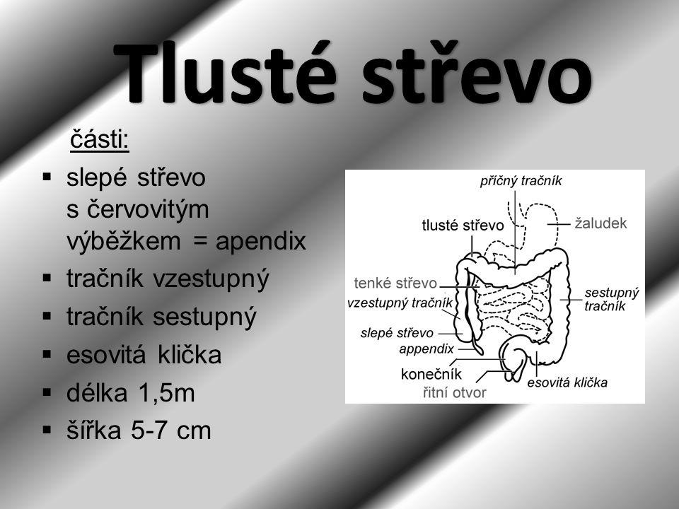 Tlusté střevo části: slepé střevo s červovitým výběžkem = apendix