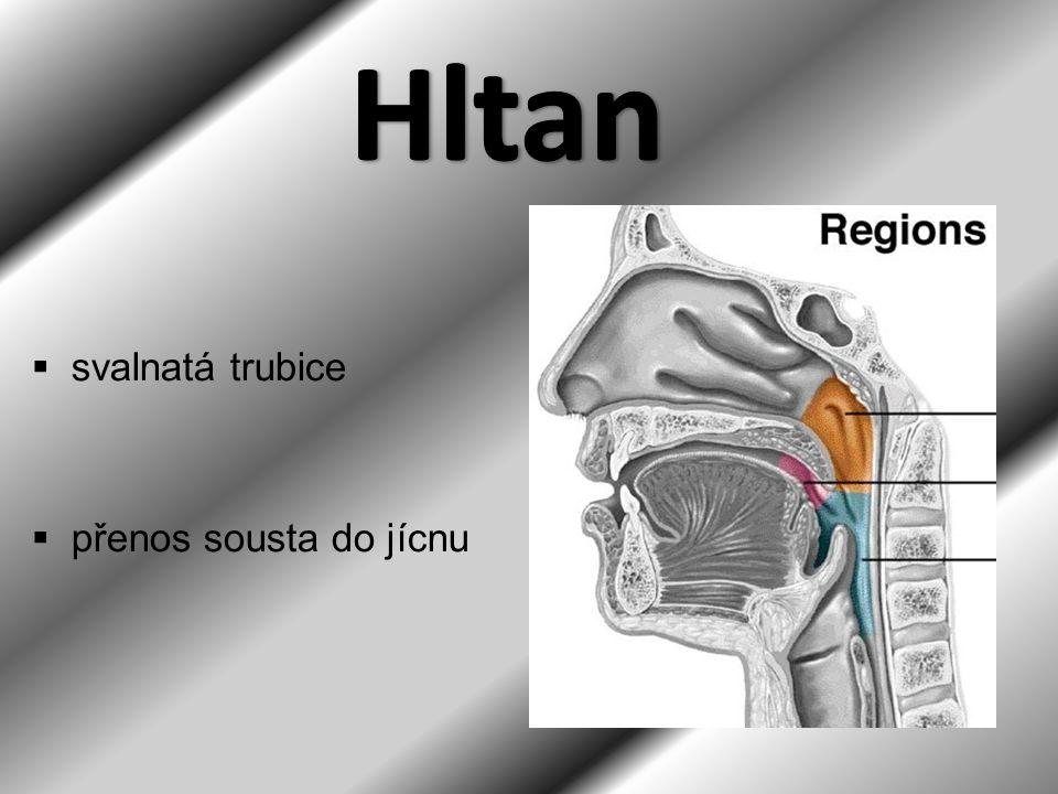 Hltan svalnatá trubice přenos sousta do jícnu