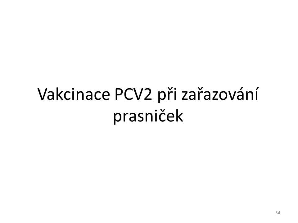 Vakcinace PCV2 při zařazování prasniček