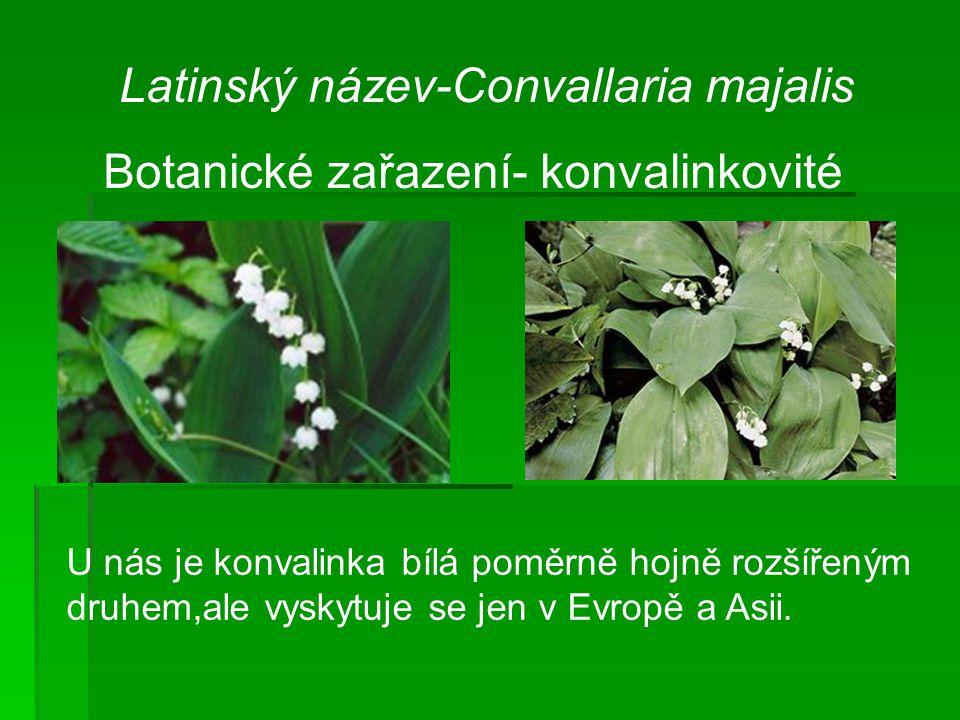 Botanické zařazení- konvalinkovité