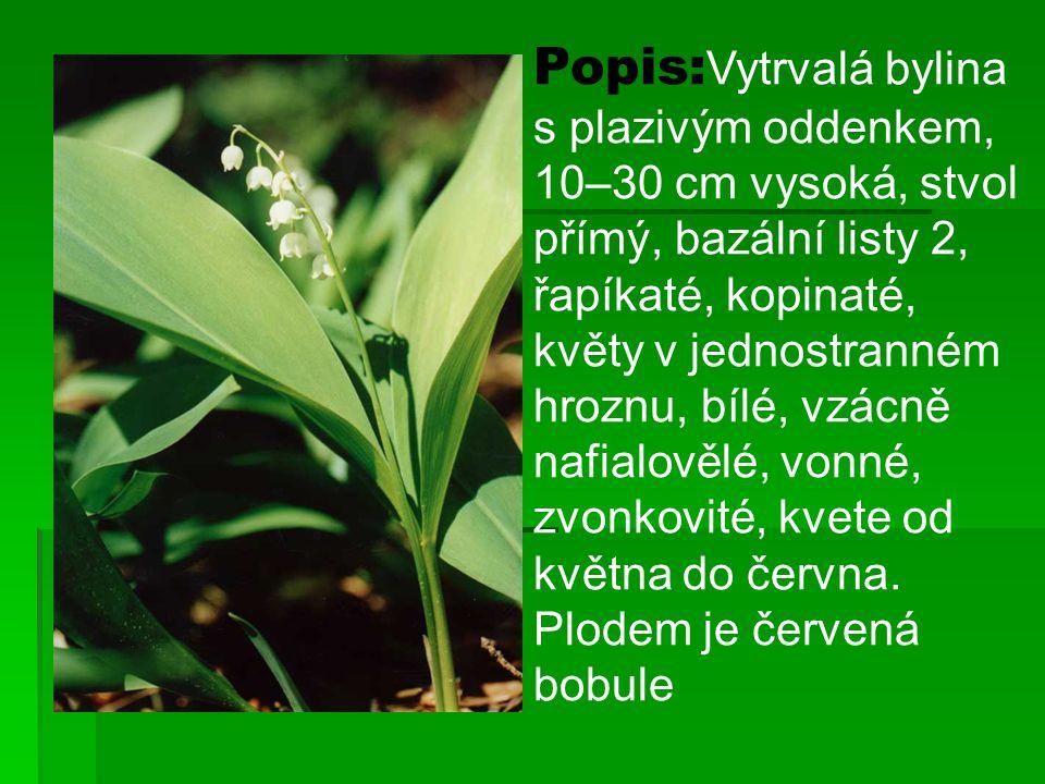 Popis:Vytrvalá bylina s plazivým oddenkem, 10–30 cm vysoká, stvol přímý, bazální listy 2, řapíkaté, kopinaté, květy v jednostranném hroznu, bílé, vzácně nafialovělé, vonné, zvonkovité, kvete od května do června.
