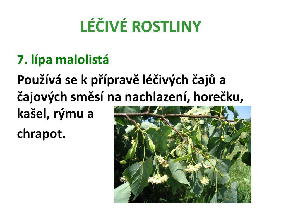 LÉČIVÉ ROSTLINY 7.