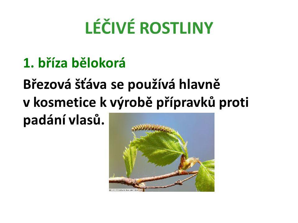 LÉČIVÉ ROSTLINY 1.