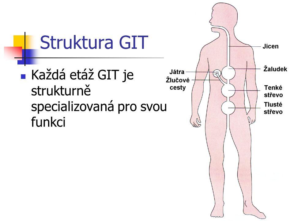 Struktura GIT Každá etáž GIT je strukturně specializovaná pro svou funkci